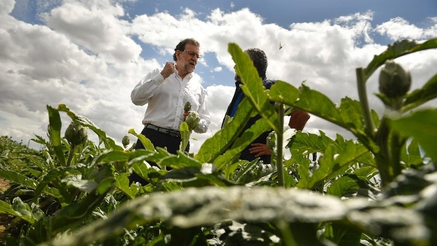 Spain's acting Primer Minister and candidate of Popular Party, Mariano Rajoy, left, stands in a field of artichokes as he talks with a farmer during a campaign election rally in Tudela, northern Spain, Wednesday, June 15, 2016. Spain's political parties are set to launch two-week campaigns leading up to a June 26 election aimed at breaking six months of political paralysis after a December election failed to negotiate a governing coalition. (AP Photo/Alvaro Barrientos)