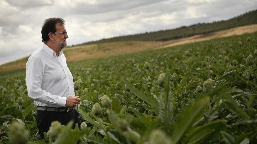Spain's acting Primer Minister and candidate of Popular Party, Mariano Rajoy, crosses a field of artichokes during a campaign election rally in Tudela, northern Spain, Wednesday, June 15, 2016. Spain's political parties are set to launch two-week campaigns leading up to a June 26 election aimed at breaking six months of political paralysis after a December election failed to negotiate a governing coalition. (AP Photo/Alvaro Barrientos)