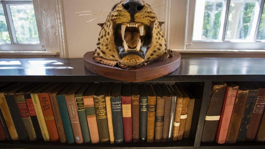 A hunting trophy lies on a bookshelf at Finca Vigia, home of U.S. writer Ernest Hemingway in Havana, Cuba, Wednesday, June 15, 2016. U.S.-Cuban normalization has brought hundreds of thousands of dollars of supplies for the construction of a simple but up-to-date conservation facility for Hemingway artifacts ranging from books and letters to fishing rods and African animal heads. (AP Photo/Desmond Boylan)