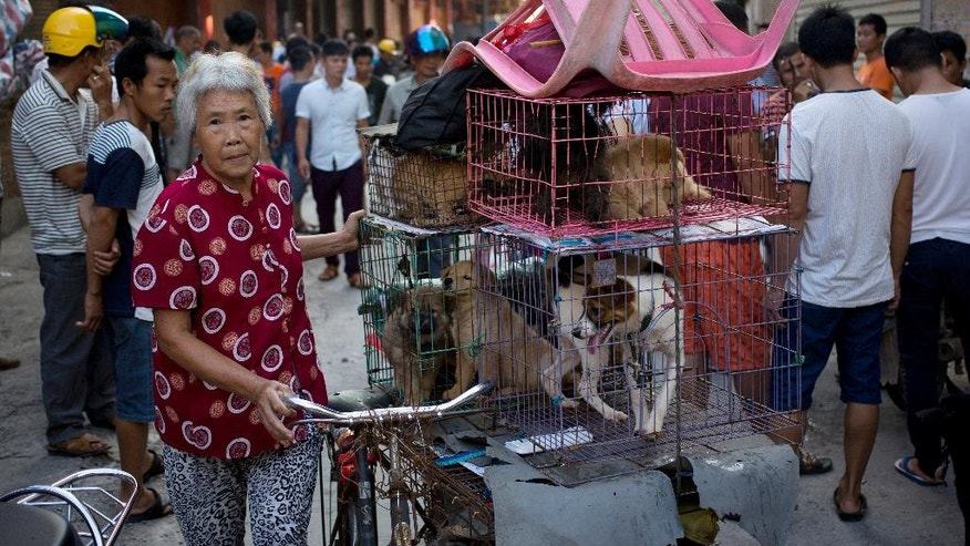 A woman with a load of dogs on her tricycle cart arrives at a market for sale during the dog meat festival in Yulin.