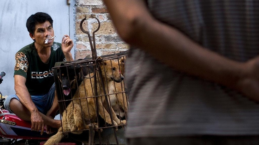 A vendor smokes as he waits for buyers next to the dogs in a cage for sale.
