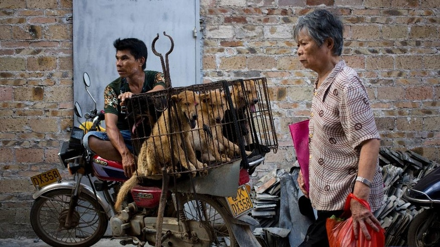 A vendor waits for buyers next to dogs in a cage for sale.