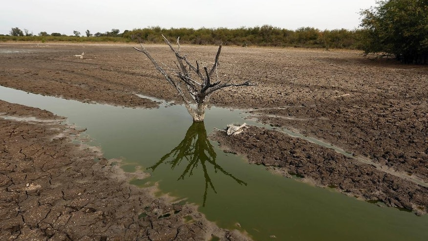 In this June 25, 2016 photo, stagnant water, what remains of the Pilcomayo river surrounds a tree stump, near the community of Fortin General Diaz, Paraguay. This area of the country, known as Chaco Boreal, is in the midst of a severe drought that is affecting both man and beast. (AP Photo/Jorge Saenz)