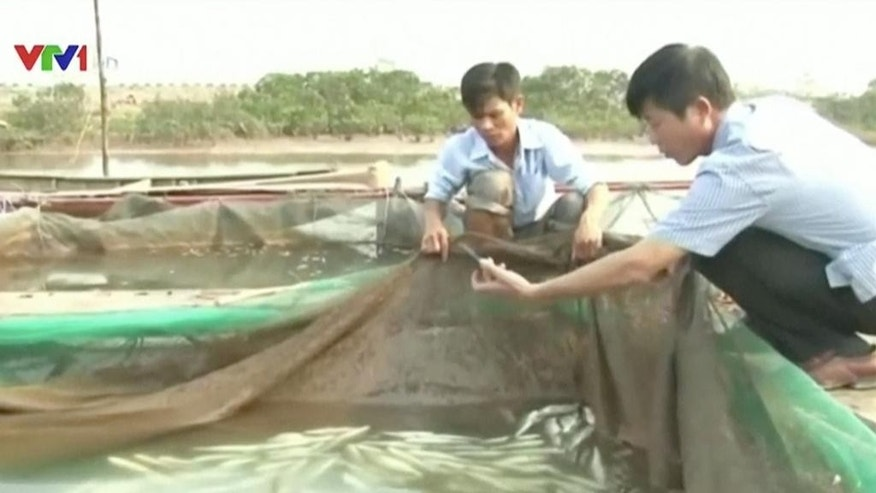 In this image made from April 2016 video provided by Vietnam's VTV, men look at dead fish at a fish farm in Ha Tinh province, Vietnam. Vietnam's government announced Thursday, June 30, 2016, that toxic waste water from Taiwan's Formosa Ha Tinh Steel Corp. was responsible for an estimated 70 tons of dead fish that began washing ashore along more than 200 kilometers (125 miles) of coastline in four central provinces in early April. The company has pledged to pay $500 million in compensation. (VTV via AP Video)