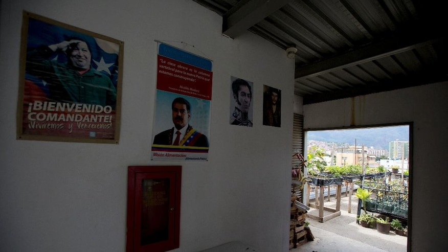 In this June 1, 2016 photo, portraits of Venezuela's late President Hugo Chavez, left, current President Nicolas Maduro, center, and independence hero Simon Bolivar decorate Francisco Salazar's top floor where he's growing vegetables, behind, in Caracas, Venezuela. With the help of a government-sponsored urban farming campaign, the head of the newly created Ministry of Urban Agriculture, Lorena Freitez, hopes home gardens will make up 20 percent of the food supply by 2019. (AP Photo/Fernando Llano)