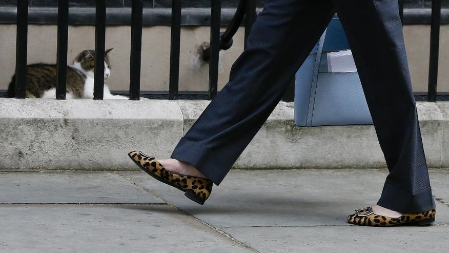The shoes of Britain's Home Secretary Theresa May as she walks past Larry the Downing Street cat as she arrives to attend a cabinet meeting at 10 Downing Street, in London, Tuesday, July 12, 2016. Theresa May will become Britain's new Prime Minister on Wednesday. (AP Photo/Kirsty Wigglesworth)