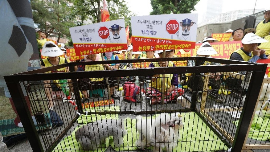 "In this June 24, 2016, photo, pet dogs are seen in a cage as puppy farmers stage a rally criticizing the media reports and demanding measures to save their endangered businesses near the National Assembly in Seoul, South Korea. South Korean dog farmers face plummeting prices for puppies and massive public criticism after media reports alleging shocking acts of cruelty at a handful of farms. Some farmers say they are near collapse because of media reports that failed to represent the overall picture. The banners read ""Same livestock laws for cows, pigs and pet dogs? and Ministry of Agriculture and Forestry should make companion law!"" (AP Photo/Ahn Young-joon)"
