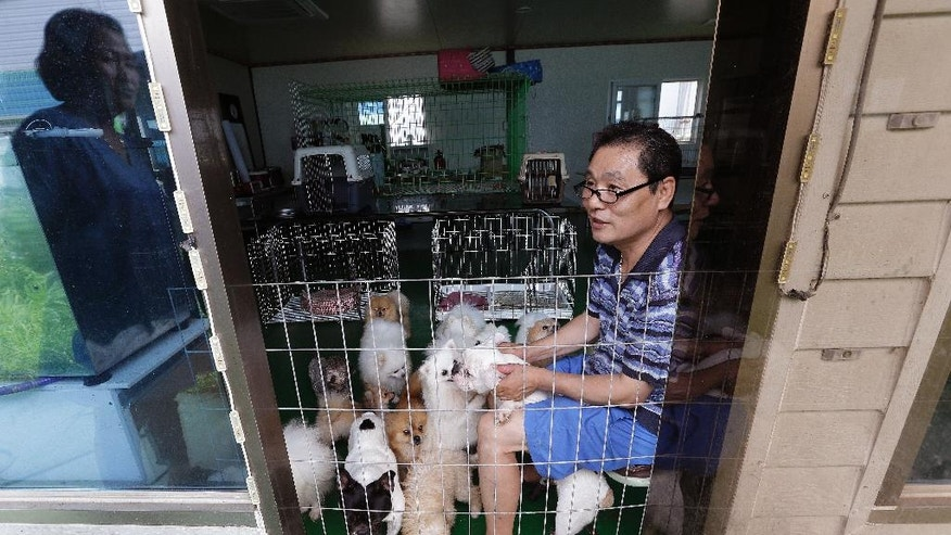 In this June 28, 2016, photo, Moon Young-joo plays with pet dogs at his puppy farm in Umseong, South Korea. South Korean dog farmers face plummeting prices for puppies and massive public criticism after media reports alleging shocking acts of cruelty at a handful of farms. (AP Photo/Ahn Young-joon)