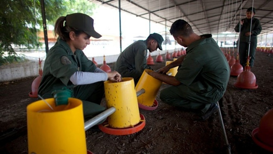 Bolivarian Army soldiers prepare water dispensers at a chicken farm on military base near Maracay, Venezuela.