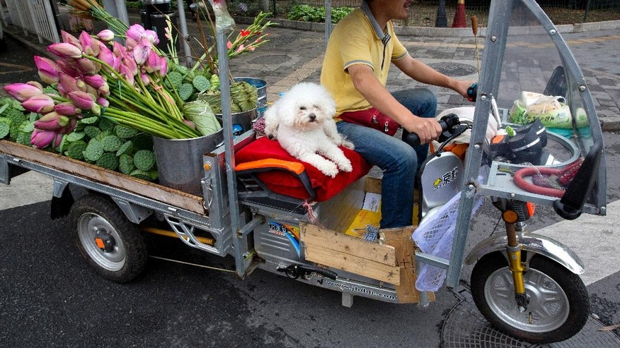 A man delivers lotus flowers with his dog for company on the streets of Beijing, China, Friday, July 15, 2016. China's economic growth held steady in the most recent quarter, according to official data released Friday, indicating policies meant to counter the slowdown in the world's second biggest economy are paying off for the moment.(AP Photo/Ng Han Guan)