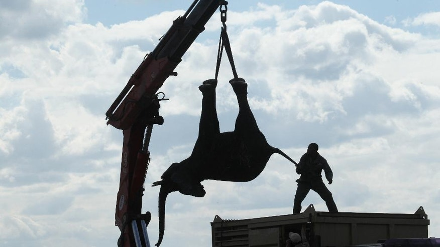 In this Tuesday July 12, 2016 photo, an elephant is lifted by a crane in an upside down position in Lilongwe, Malawi, in the first step of an assisted migration of 500 of the threatened species. African Parks, which manages three Malawian reserves is moving the 500 elephants from Liwonde National Park, this month and next, and again next year when vehicles can maneuver on the rugged terrain during Southern Africa's dry winter. (AP Photo/Tsvangirayi Mukwazhi)