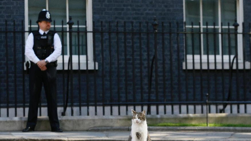 Larry, the Downing Street cat, sits in the street as politicians attend a cabinet meeting at 10 Downing Street in London, Tuesday, July 19, 2016. It is the first cabinet meeting with Britain's new Prime Minister Theresa May. (AP Photo/Kirsty Wigglesworth)