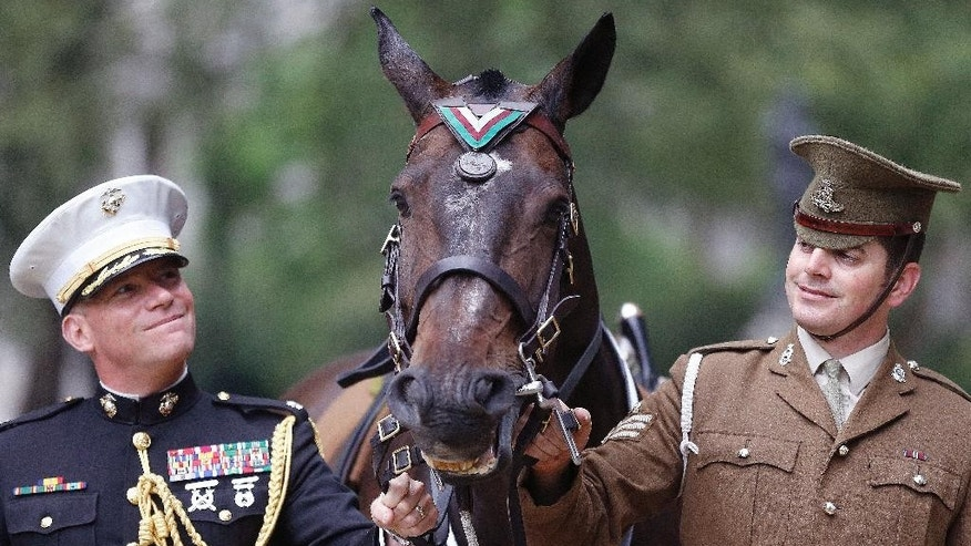 Horse Haldalgo, representing life-saving US Marine horse Sergeant Reckless who served with the US Marine Corps during the Korean War, is awarded with the PDSA Dickin Medal beside Sergeant Mark Gostling, right, and Lieutenant Colonel Michael Skaggs in London, Wednesday, July 27, 2016. Reckless, who survived one of the bloodiest battles in modern military history, has today been awarded the PDSA Dickin Medal – known as the animal equivalent of the Victoria Cross – for her bravery and devotion to duty during the Korean war 1950 until 1953. (AP Photo/Frank Augstein)