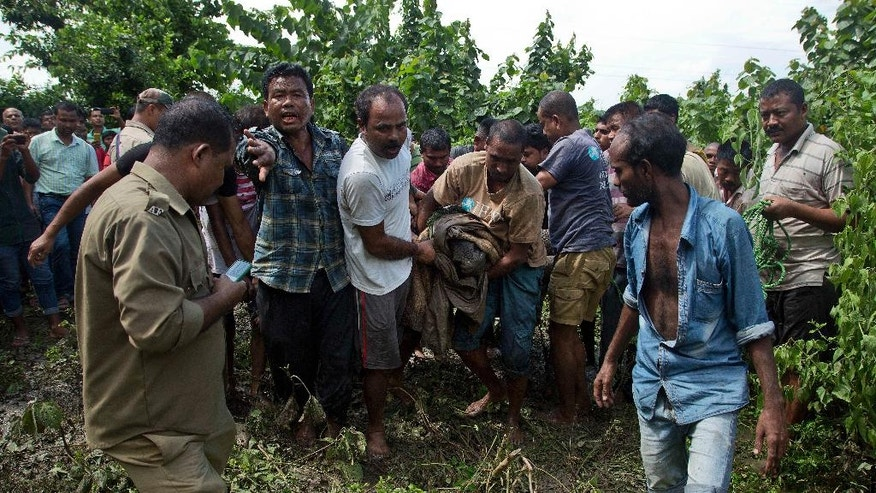 Indian forest officials, wildlife conservationists and villagers carry a baby Rhino that strayed into an adjacent village following floods at the Kaziranga National Park, east of Gauhati, northeastern Assam state, India, Thursday, July 28, 2016. The Rhino calf was rescued and sent to a conservation center. Forest officials say they have rescued six rhino calves from being washed away by floodwaters that have swamped the national park. (AP Photo/Anupam Nath)