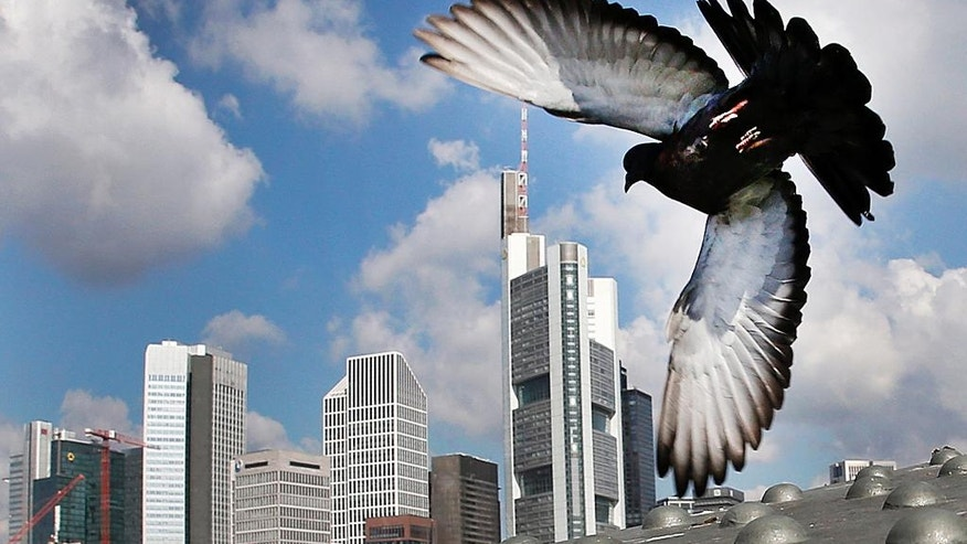 A pigeon flies away from a bridge in front of the towers of the banking district in Frankfurt, Germany, Monday, Aug. 1, 2016. (AP Photo/Michael Probst)