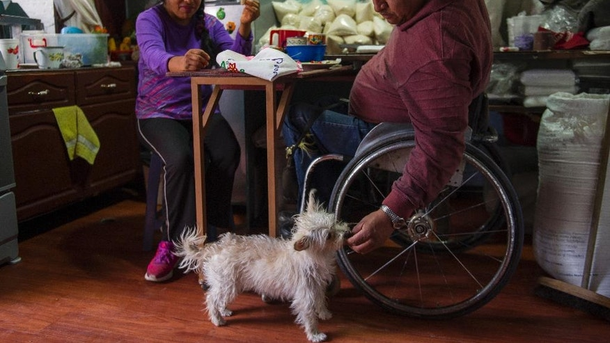 In this July 21, 2016 photo, Salvador Espinoza feeds a few egg morsels to pet dog Susana, while having lunch with his wife Graciela Sanchez Martinez in their home, in Chalco, Mexico. Espinoza spends his days in a wheelchair due to a spinal cord injury that left him paralyzed from the waist down. Espinoza and his wife, who met over 10 years ago at a wheelchair basketball tournament, have performed in over a dozen charreadas or Mexican rodeos and form the only married couple in their Patino paracharreria team. (AP Photo/Nick Wagner)