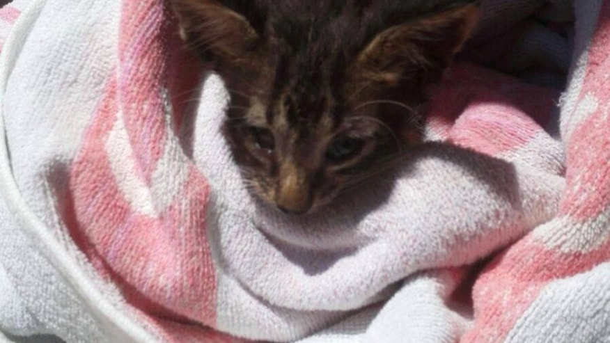 Italian sailor uses mouth-to-mouth to revive drowning kitten