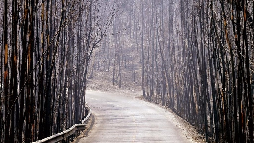 Burnt trees line a road, Tuesday, Aug. 9 2016, near Agueda, in the region of Aveiro, northern Portugal. The National Civil Protection Service said some 2,900 firefighters were in action Tuesday fighting dozens of forest fires. The worst-hit areas were in northern Portugal, where temperatures have exceeded 30 degrees Celsius (86 Fahrenheit) since Saturday. (AP Photo/Sergio Azenha)