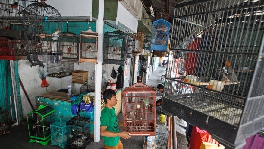 Birds are displayed in cages at Gubeng bird market in Surabaya, East Java, Indonesia, Thursday, Aug. 11, 2016. TRAFFIC, a U.K.-based wildlife trade monitoring group, has called on Indonesia to take strong action against traders of endangered birds who are driving several species toward extinction, following its latest survey which recorded nearly 23,000 birds in five markets in three cities in eastern and central Java. (AP Photo/Trisnadi)
