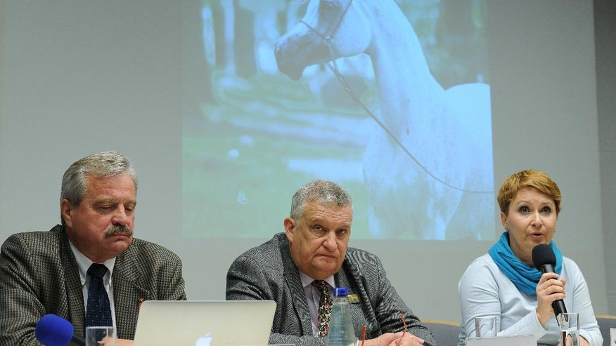 "In this Feb. 29, 2016 photo, former managers in the respected Arabian horse breeding program, Marek Trela, left, Jerzy Bialobok, center, and Anna Stojanowska attend a press conference after being fired from their posts, in Warsaw, Poland, Monday. Irregularities surrounding the sale of mare Emira at the yearly horse auction ""Pride of Poland"" have fueled a political scandal in Poland that has cost one official his job, prompted calls for a criminal organization, and damaged the reputation of Poland's respected state Arabian breeding program. (AP Photo/Alik Keplicz)"