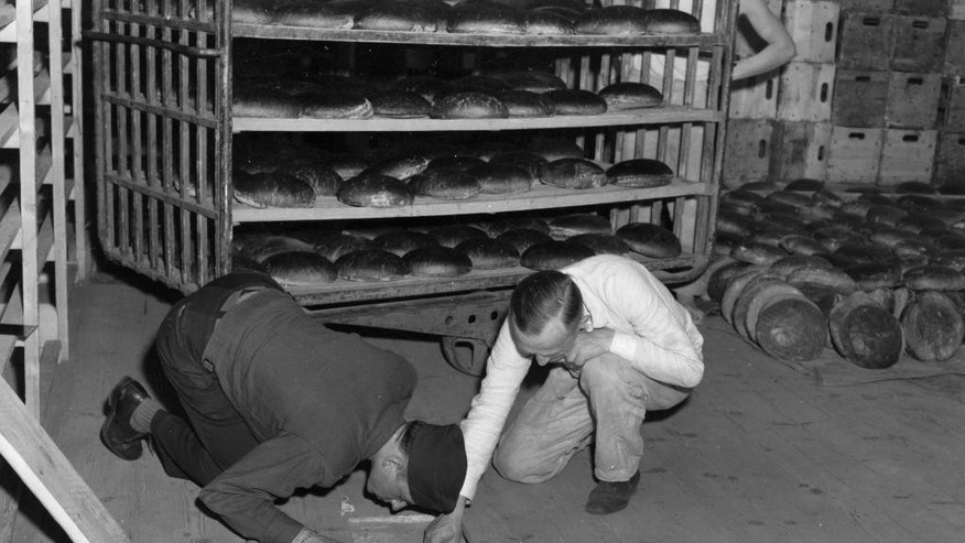 "In this April 1946 photo from the U.S. Army Signal Corps, U.S. Lt. Robert R, Rogers, left, and Erich Pinkau, of the German criminal police, examine the under-floor hiding place where arsenic was found in a Nuremberg, Germany bakery which supplied bread to Stalag 13, seven miles away. In mid-April, over 2,200 prisoners at the camp were stricken with arsenic poisoning from the toxicant coated on the loaves given to the prisoners. Seventy years after the most daring attempt of Jewish Holocaust survivors to seek revenge, the leader of the plot has only one simple regret _ that to his knowledge he didn't actually succeed in killing any Nazis. Joseph Harmatz is one of the few remaining Jewish ""Avengers"" who carried out a mass poisoning of former SS men in an American prisoner-of-war camp in 1946 after World War II. The poisoning sickened more than 2,200 Germans but ultimately caused no known deaths. (U.S. Army Signal Corps via AP)"