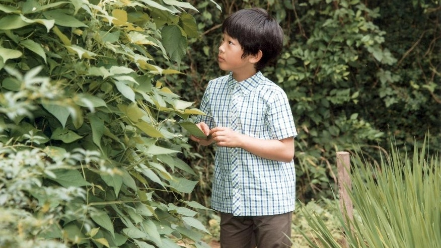 In this photo taken Aug. 10, 2016 and provided by Imperial Household Agency of Japan on Tuesday, Sept. 6, 2016, Japan's Prince Hisahito looks at leaves beside a rice field of the Akasaka Detached Palace in Tokyo. Prince Hisahito turned 10 years old on Tuesday. (Imperial Household Agency of Japan via AP)