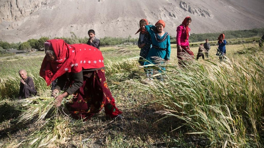 In this Aug. 16, 2016 photo, a family works in their wheat field, in Wakhan district of Badakhshan province, far northeastern Afghanistan. The Wakhan corridor, which has been named Afghanistan's second national park, is the country's most -- perhaps only -- peaceful region. But it is so poor, even for Afghanistan, that people borrow food and children go barefoot during the long, harsh winters. (AP Photos/Massoud Hossaini)