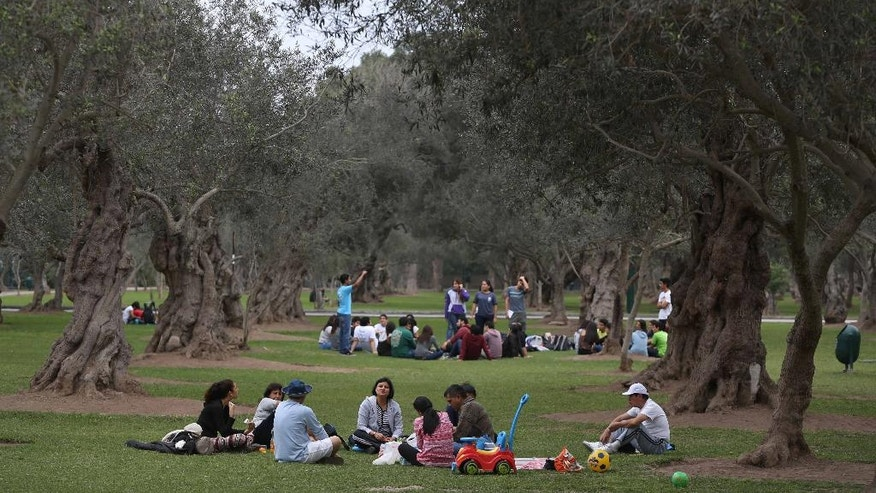 In this Aug. 28, 2016 photo, a group of students rest in El Olivar park in Lima, Peru. Four centuries ago the Count of San Isidro planted nearly 2,000 olive trees from his native Spain in the sprawling grove on the edges of Lima, Perfectly suited to the arid climate, the olive trees thrived as the city grew around them. Their twisting knobby trunks and shady leaves became the centerpiece of a park named for them, El Olivar, that's a magnet for lovers, exercise enthusiasts and children on school field trips. (AP Photo/Martin Mejia)