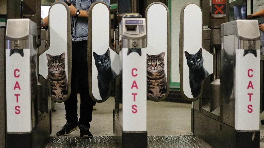 A man approaches the barriers which feature portraits of cats, at Clapham Common Tube station in London, Tuesday, Sept. 13, 2016. Cat lovers in need of a pick-me-up may start gravitating toward London's Clapham Common Tube station. All of the station's customary advertisements have been taken down, replaced by 68 oversized portraits of rather adorable cats.  (AP Photo/Frank Augstein)