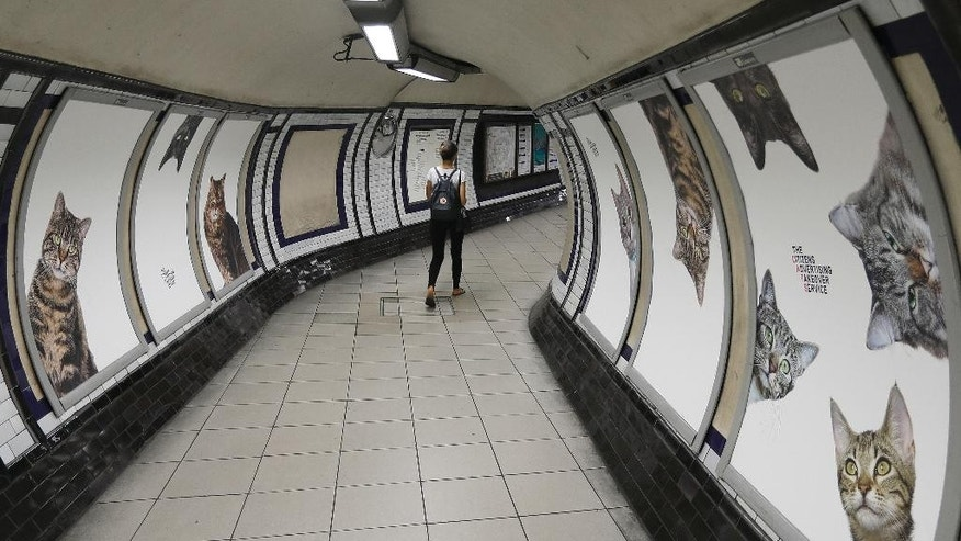 Posters featuring cats, on display, at the Clapham Common Tube station in London, Tuesday, Sept. 13, 2016. Cat lovers in need of a pick-me-up may start gravitating toward London's Clapham Common Tube station. All of the station's customary advertisements have been taken down, replaced by 68 oversized portraits of rather adorable cats.  (AP Photo/Frank Augstein)