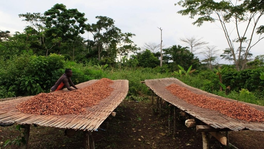 FILE - In this file photo taken Tuesday, May 31, 2011, farmer Alidou Ouedraogo arranges drying cocoa beans as he prepares to cover them for the night, on a cocoa farm outside the village of Fangolo, near Duekoue, Ivory Coast. Ivory Coast has long been known for its raw cocoa production, producing about 35 percent of the world's supply. But less than a third of what it produces is turned into finished products locally. (AP Photo/Rebecca Blackwell,File)