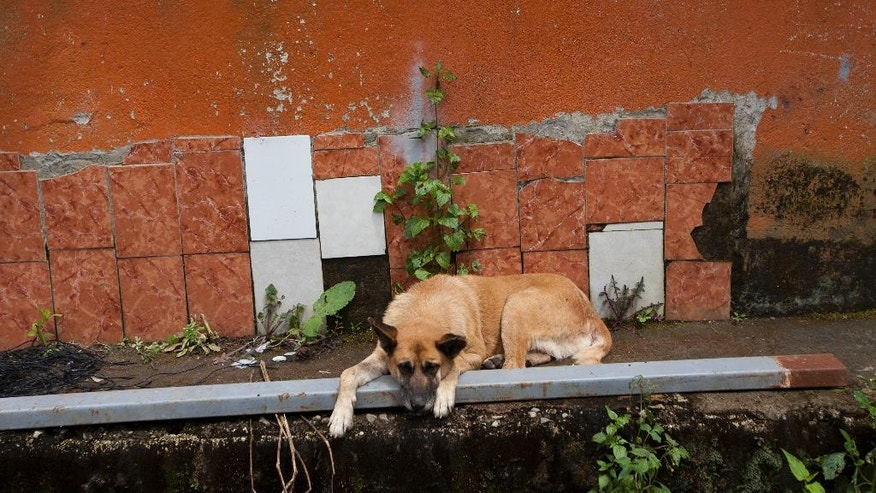 This Sept. 27, 2016 photo shows a dog lying in front of an abandoned home in the neighborhood El Cambray in Santa Catarina Pinula on the outskirts of Guatemala City, one year after the neighborhood was destroyed by a mudslide. Officials estimate there are 8,000 places in Guatemala where the threat of floods, mudslides and other disasters make it too risky to live. Yet none of those communities has been successfully relocated in the year since the disaster. (AP Photo/Moises Castillo)