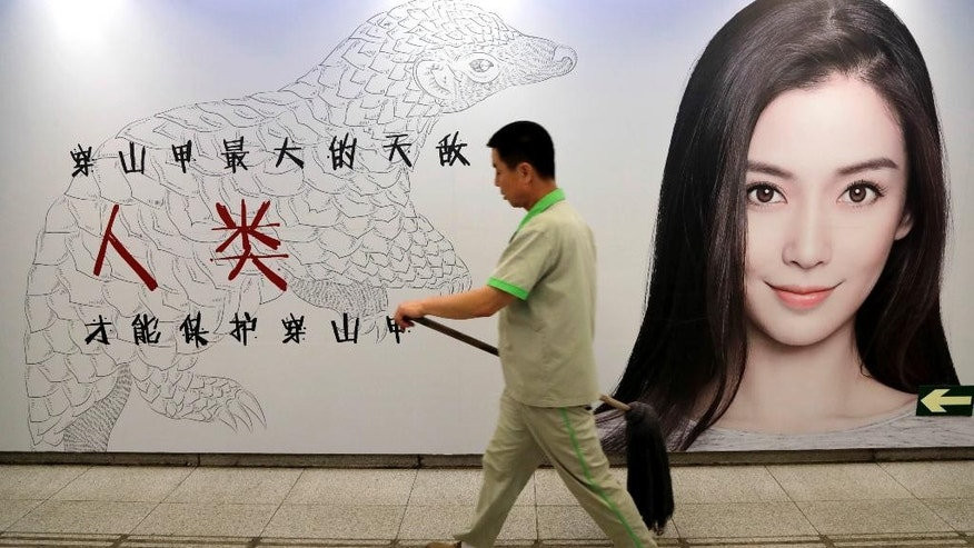 In this Thursday, Aug. 25, 2016 photo, a maintenance worker walks past an anti-pangolin trafficking billboard featuring Chinese actress Angelababy in an underground walkway in Beijing. Although a global wildlife summit banned all trade of pangolins, an anteater with a distinctive coat of hard scales, doubts remain whether that will stop the illegal traffic of pangolins in Africa fueled by a growing demand from Asian consumers, particularly Chinese. (AP Photo/Andy Wong)