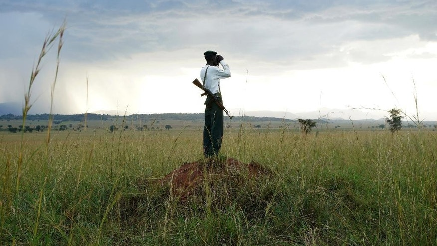 In this Friday, Sept. 23, 2016 photo, park ranger Denis Odong uses a pair of binoculars to scan the horizon in Kidepo Valley National Park in northern Uganda. Although a global wildlife summit banned all trade of pangolins, doubts remain whether that will stop their illegal traffic in Africa fueled by growing demand from Asian consumers, particularly in China. (AP Photo/Helene Franchineau)