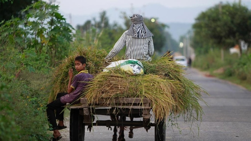 Indian villagers living near the line of control, which divides Kashmir between India and Pakistan, collect fodder for their cattle in Hamirpur village, 62 kilometers from Jammu, India, Wednesday, Oct.5, 2016. Pakistan and India traded fresh accusations of cross-border fire in Kashmir on Tuesday, a day after top officials discussed ways of de-escalating tensions over the disputed Himalayan region. (AP Photo/Channi Anand)