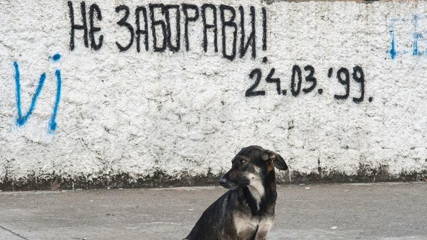 "In this photo taken on Wednesday, Oct. 12, 2016, a dog sits on the street by graffiti that reads: ""Don't forget! March 24, 1999. - day when NATO began its airstrikes, attacking Serbia and Montenegro"", in downtown Podgorica, Montenegro. The Sunday general election in the tiny Balkan nation is the most significant since the vote for independence from much larger Serbia a decade ago. (AP Photo/Risto Bozovic)"