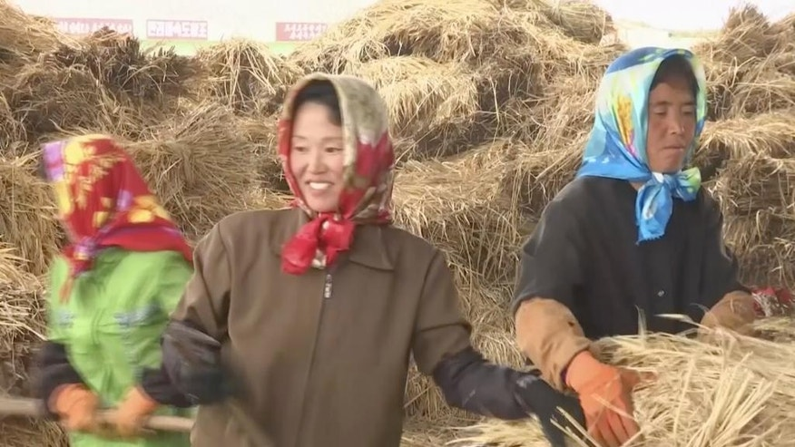 In this Friday, Oct. 7, 2016, image made from video, farmers work during harvest in South Hwanghae province, North Korea. North Korea could be looking at a better harvest this year thanks to good weather and ongoing changes in policy that allow farmers to keep more of what they produce. With the main harvest of 2016 now underway, officials say that despite severe flooding in the northeast the overall yield is likely to slightly better than last year. Farmers say the new policies, which let them keep _ and sell _ more of what they grow, are boosting production and making them more competitive. (AP Photo)