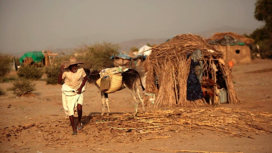 In this photo taken on Thursday, Oct. 6, 2016, an elderly man walks next to his donkey at a camp for internally displaced people near the town of Abs, located on Yemen's western coastal plain below towering desert mountains. Hundreds of Yemenis fleeing war are now living in tents and mud-brick shelters scattered across a cornfield, where they buried the remains of loved ones they carried with them when they escaped. (AP Photos Hani Mohammed)