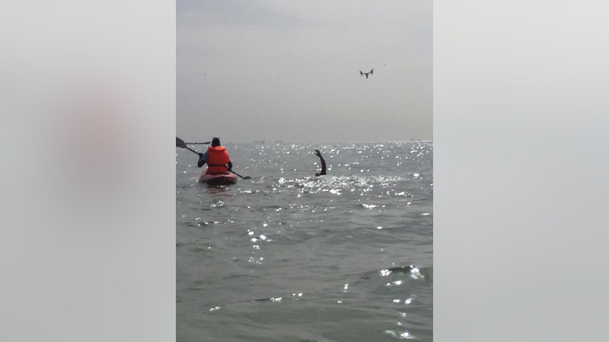 Ben Hooper is followed by a kayaker as he sets off from the beach on a swimming expedition to cross the Atlantic, in Dakar, Senegal, Sunday, Nov. 13, 2016.   Ben Hooper has been planning to make the epic endeavour for more than three years to become the first person to swim the full 1,635 nautical miles from Senegal to Brazil. (AP Photo/Carley Petesch)