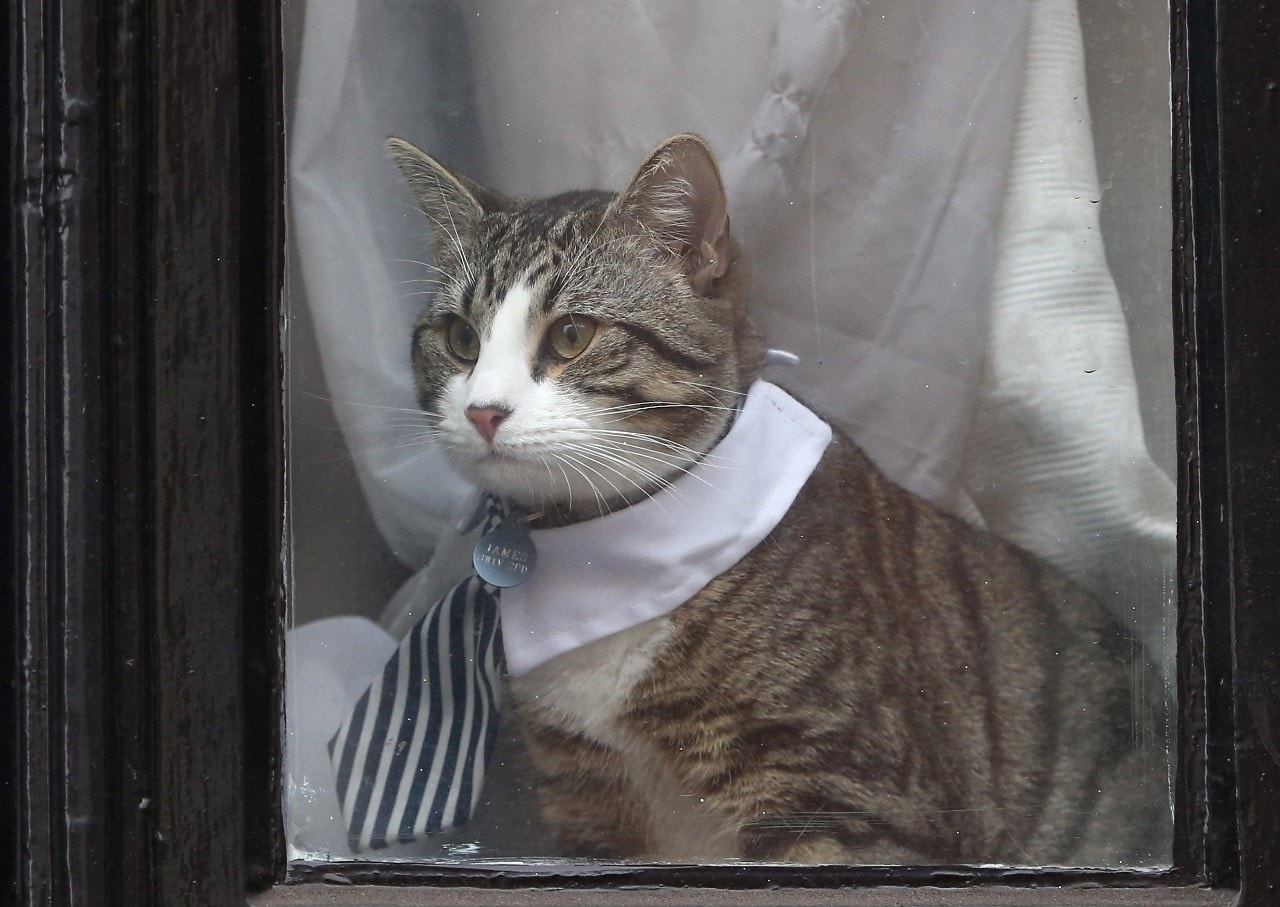 Assange's cat dressed to impress for owner's grilling