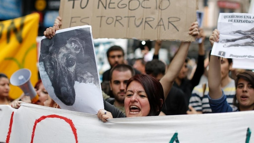 "Activists against greyhound racing shout against supporters of the practice, one holding a sign that reads in Spanish ""Your business is torture,"" as both groups gather outside Congress in Buenos Aires, Argentina, Wednesday, Nov. 16, 2016. Lawmakers are expected to vote Wednesday on a law that would prohibit greyhound racing nationwide. (AP Photo/Victor R. Caivano)"