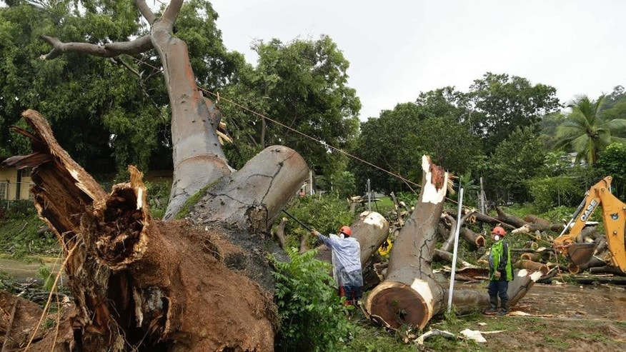 Workers cut a tree that fell and killed a boy outside a school in Panama City, Tuesday, Nov. 22, 2016. Civil defense officials in Panama say the country has already seen three deaths blamed on late-season Tropical Storm Otto. (AP Photo/Arnulfo Franco)