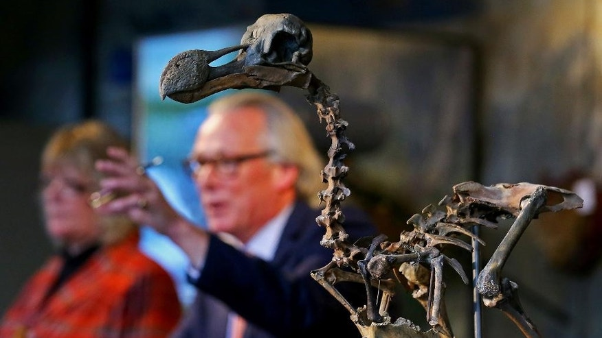 Auctioneer James Rylands sells a rare near-complete Dodo skeleton to a private collector for £346,300 pounds ($430,000), including buyer's premium, at Summers Place Auctions in Billingshurst, southern England,  Tuesday, Nov. 22, 2016. (Gareth Fuller/PA via AP)