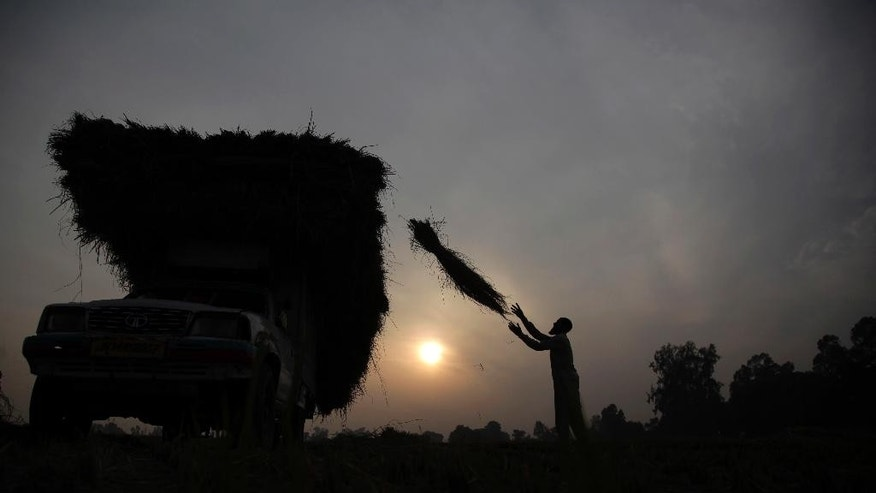 An Indian farmer loads harvested rice crop for transportation near the India-Pakistan international border in Ranbir Singh Pura, about 25 kilometers from Jammu, India, Wednesday, Nov. 23, 2016. Deadly exchanges of fire in the disputed Kashmir have intensified in recent weeks. Tensions have escalated since militants attacked an Indian army base in Kashmir in September. India said the militants were supported by Pakistan, charges denied by Islamabad. (AP Photo/Channi Anand)