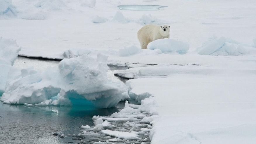 FILE - In this Friday June 13, 2008 file photo, a polar bear stands on an ice floe near the Arctic archipelago of Svalbard, Norway. Scientists said Friday, Nov. 25, 2016 that Svalbard has seen such extreme warmth this year that the average annual temperature could end up above freezing for the first time on record. (AP Photo/Romas Dabrukas, File)