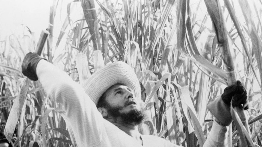FILE - In this Feb. 13, 1961 file photo provided by Cuba's government, Cuba's leader Fidel Castro cuts sugar cane in an unknown location in Cuba. Castro has died at age 90. President Raul Castro said on state television that his older brother died late Friday, Nov. 25, 2016. (Cuban Government via AP, File)