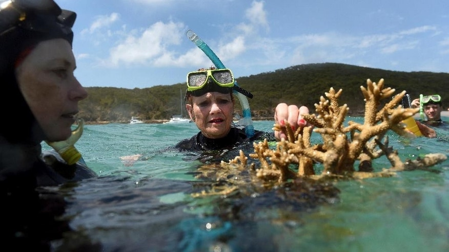 In this Friday Nov. 25, 2016, photo Australian senator Pauline Hanson listens to marine scientist Alison Jones, left, as she displays a piece of coral on the Great Barrier Reef off Great Keppel Island, Queensland, Australia. Australian scientists say warming oceans year 2016 have caused the biggest die-off of corals ever recorded on Australia's Great Barrier Reef. The Australian Research Council Centre of Excellence for Coral Reef Studies said Tuesday, Nov. 29, 2016, that the worst-affected area was a 700-kilometer (400-mile) swath in the north of the World Heritage-listed 2,300-kilometer (1,400-mile) chain of reefs off Australia's northeast coast. (Dan Peled, AAP Image via AP)