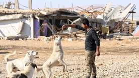 An Iraqi Army soldier feeds dogs in a village recently liberated from the Islamic State group outside Mosul, Iraq, Saturday, Dec. 3, 2016. (AP Photo/Hadi Mizban)