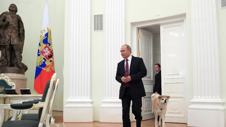 In this photo taken on Wednesday, Dec. 7, 2016 and made available on Tuesday, Dec. 13, Russian President Vladimir Putin enters a hall with his Akita-inu dog Yume before his interview with the Nippon Television Network Corporation and the Yomiuri Shimbun prior to his visit to Japan and meeting with Japan's Prime Minister Shinzo Abe, in the Kremlin in Moscow, Russia. (Alexei Druzhinin/ Sputnik, Kremlin Pool Photo via AP)