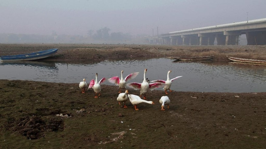 Fowl gather along a backwateer of the Ravi River, in Lahore, Pakistan, Wednesday, Dec. 14, 2016. Under the Indus Water Treaty, India has exclusive rights to three Indus basin rivers, including the Ravi, which has virtually disappeared on the Pakistani side. Pakistani and Indian officials said Wednesday they would consider resuming direct talks over water sharing after the World Bank halted a process to arbitrate a longstanding dispute over two Indian hydroelectric projects. (AP Photo/K.M. Chaudary)